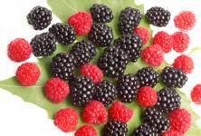 Potraviny jako prevence Alzheimerovy choroby