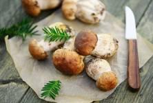 Objevte léčivou sílu lesních hub!
